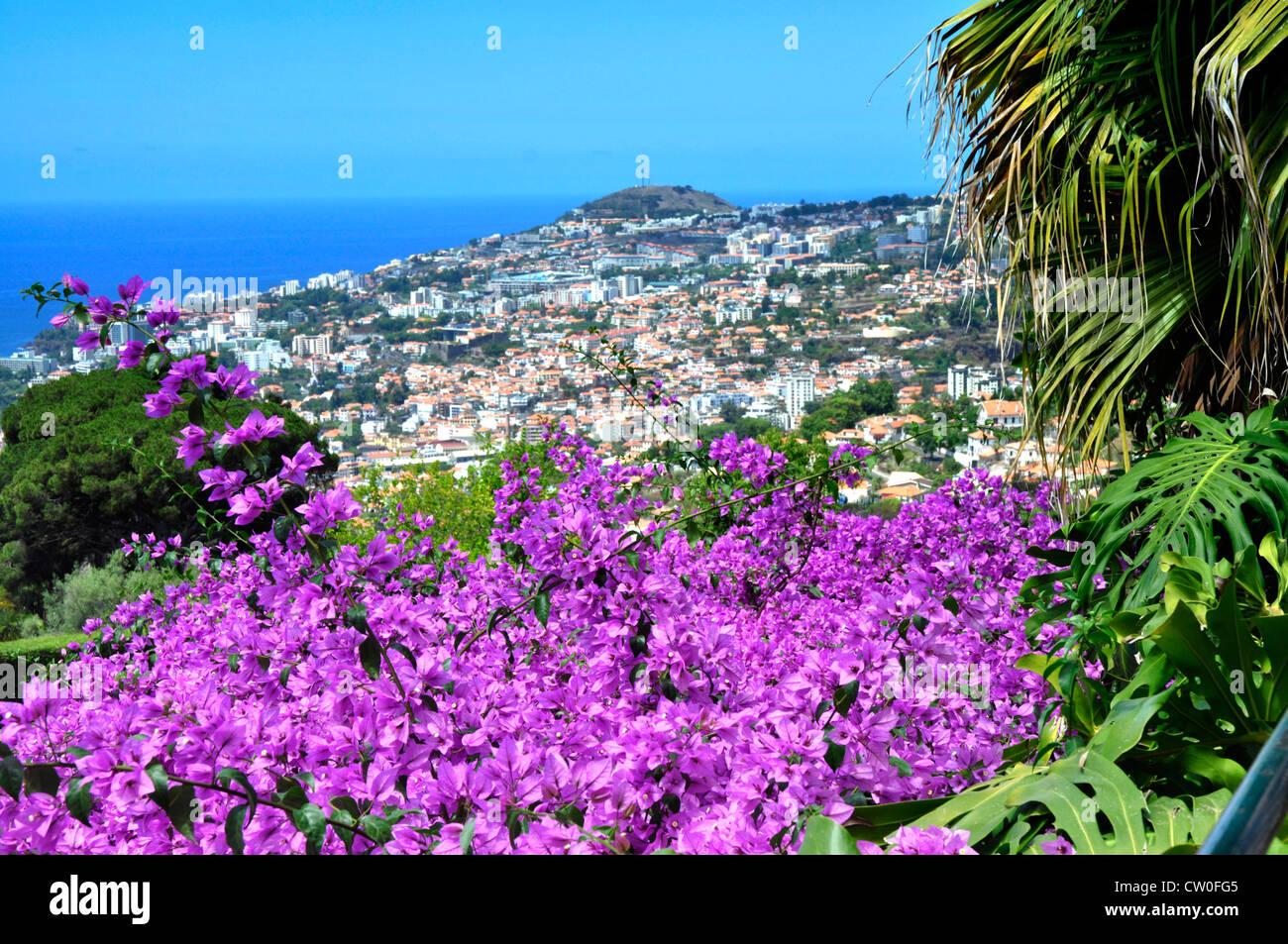 Portugal - Madeira - Funchal - ladera encima Gdns Botánico - vistas ...