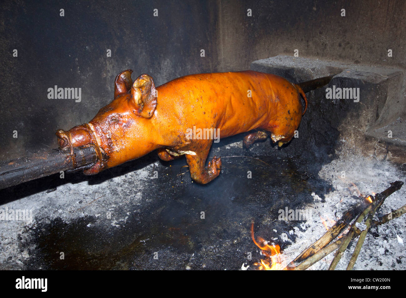 55 Gambar Babi Guling Kekinian