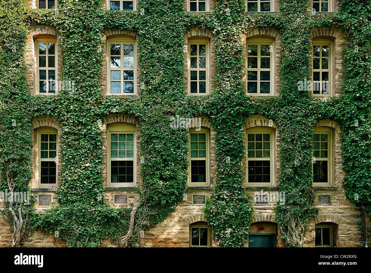 Información edificio cubierto de hiedra, de la Universidad de Princeton, Nueva Jersey, EE.UU. Imagen De Stock