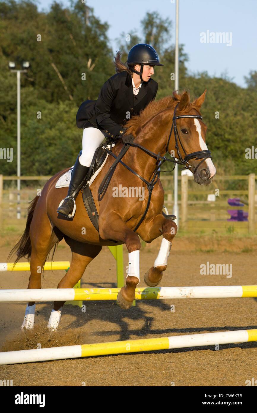 Un jinete y su caballo saltando una valla durante un concurso hípico Imagen De Stock