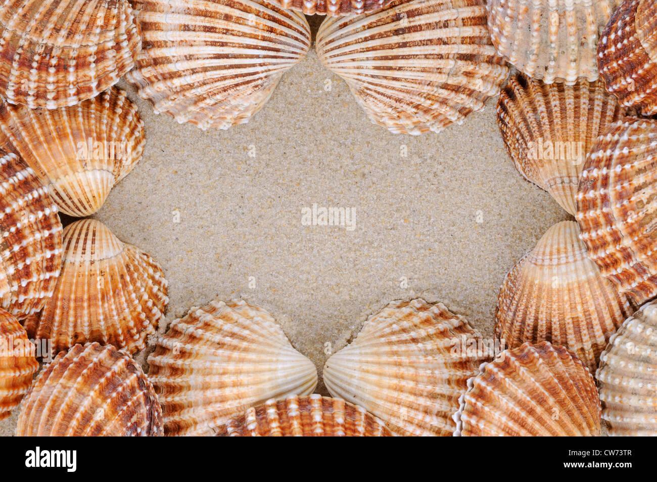 Berberechos berberechos (shells) (Cardiidae), marco de caracoles en ...