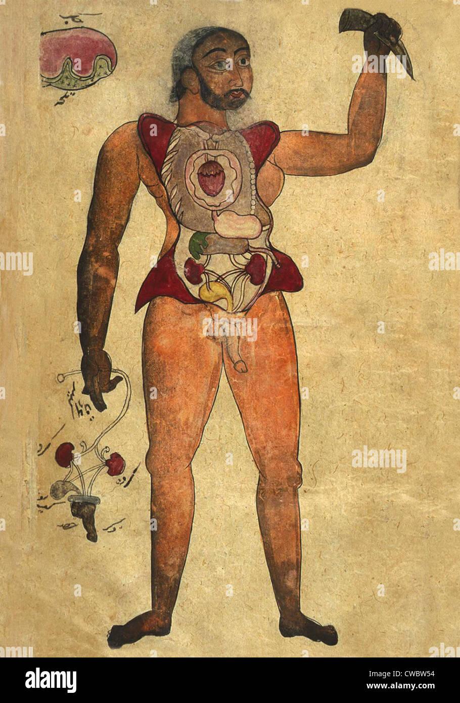 Ilustración anatómica de una figura masculina con su abdomen y pecho ...