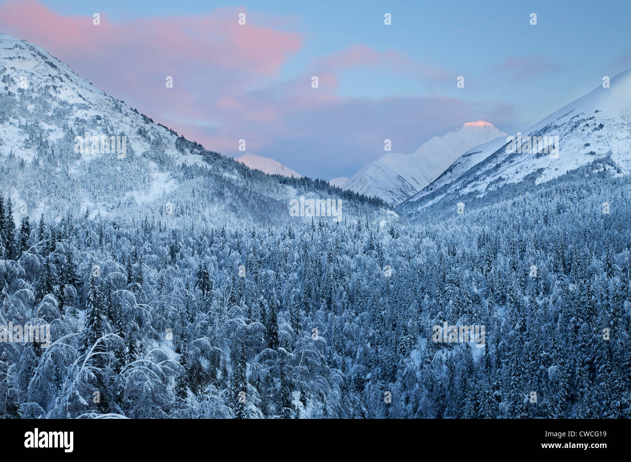 Árboles nevados al atardecer, el Bosque Nacional de Chugach, Alaska. Imagen De Stock