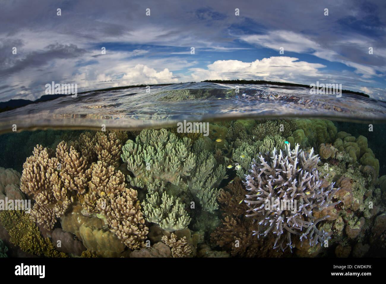 Una diversa arrecifes de coral crece justo por debajo de la línea de flotación cerca de una remota aldea en las Islas Russell, parte de las Islas Salomón. Foto de stock