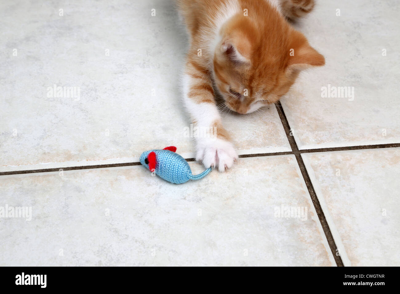 Jengibre y Blanco gatito jugando con un ratón de juguete Foto de stock