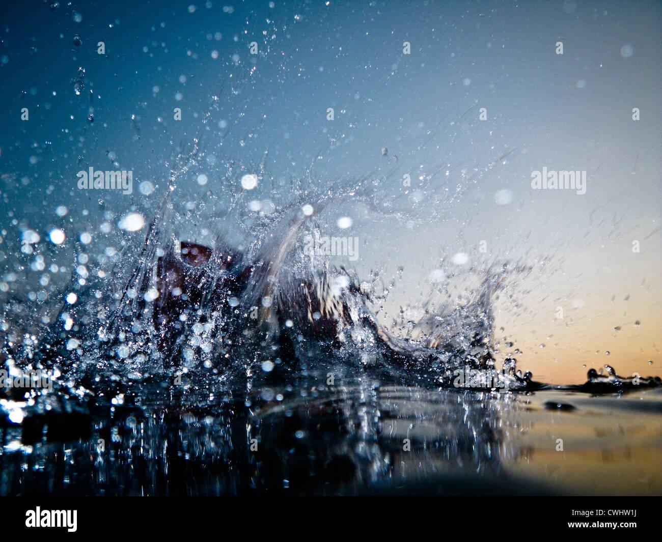 Superficie de agua,splash,salpicaduras de agua Imagen De Stock