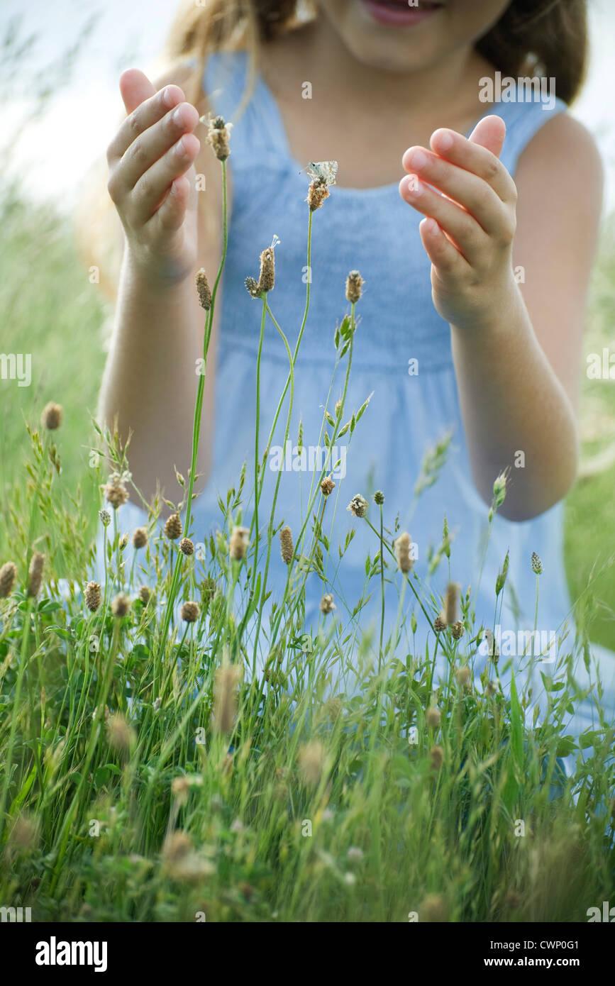 Mariposa de Wildflower, chica con manos ahuecados intentaba pescar Foto de stock