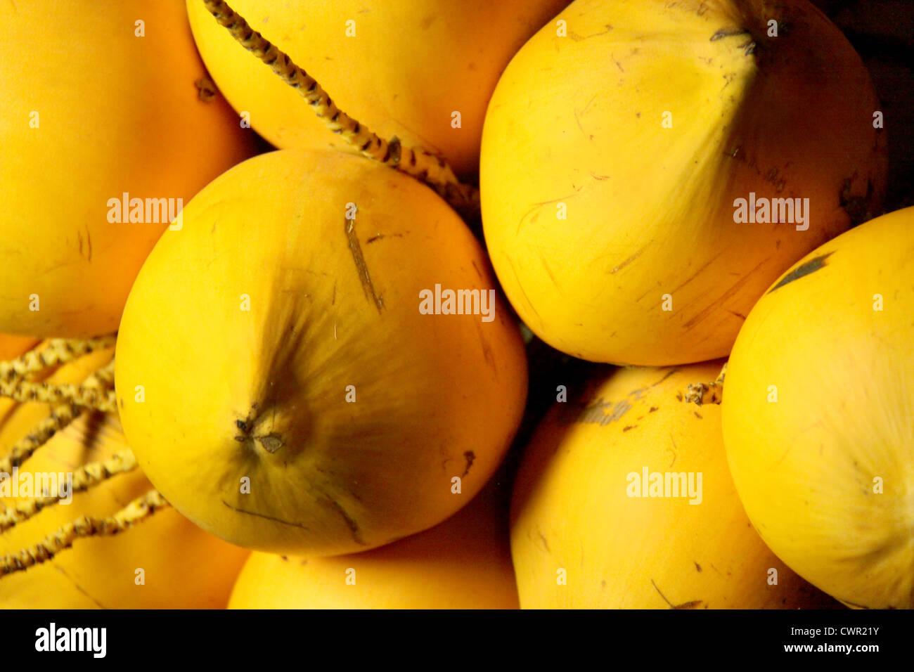 Coco tierno Imagen De Stock