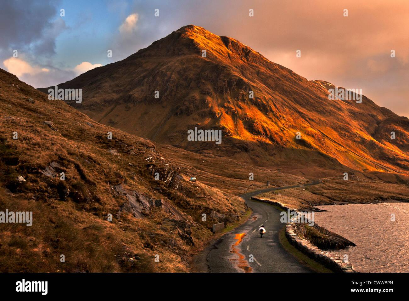 Ovejas caminando por la carretera de montaña rural Imagen De Stock