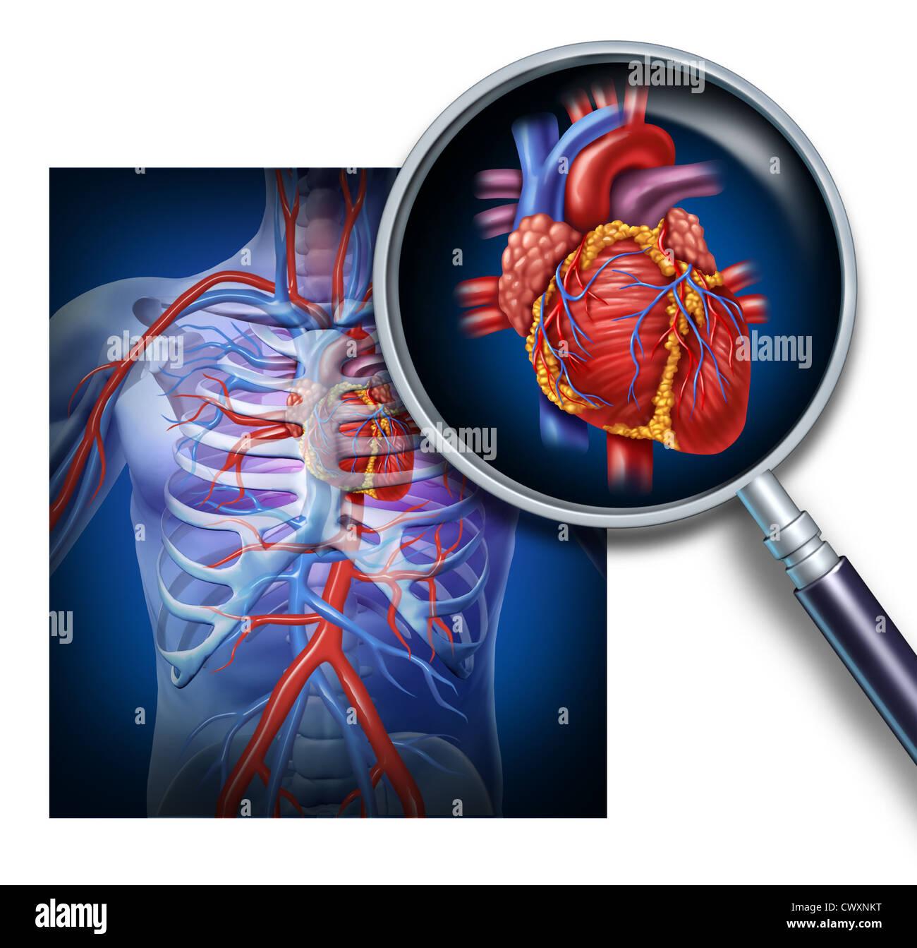 Asombroso Diagrama De Sistema De órganos Humanos Regalo - Imágenes ...