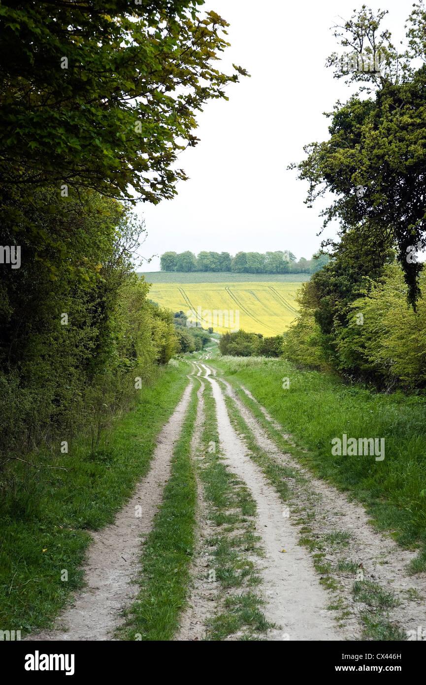 El Ridgeway antigua pista cerca de Uffington castle, Oxfordshire, REINO UNIDO Foto de stock