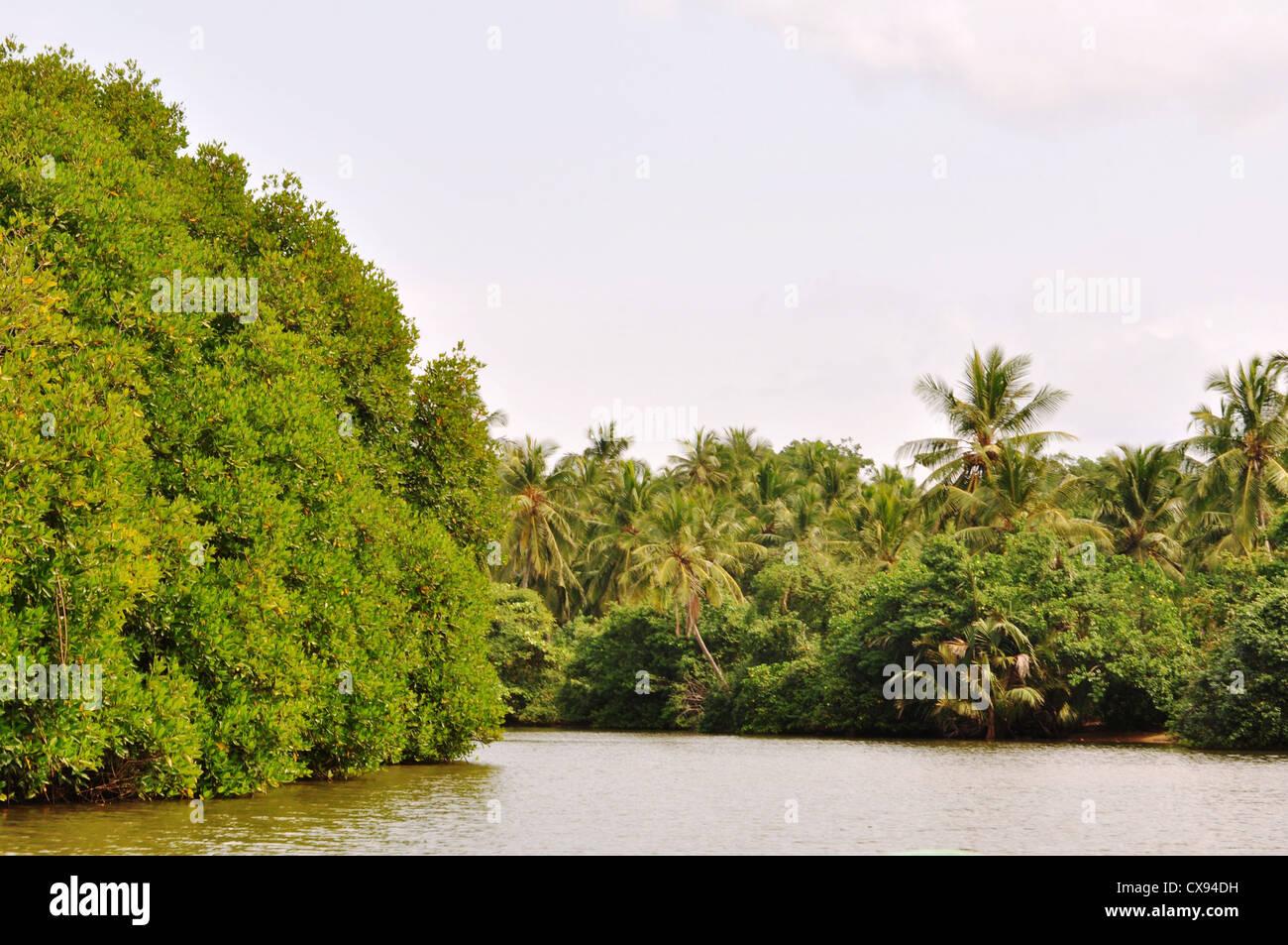 Por la ribera waikkal verdoso en Sri Lanka Foto de stock