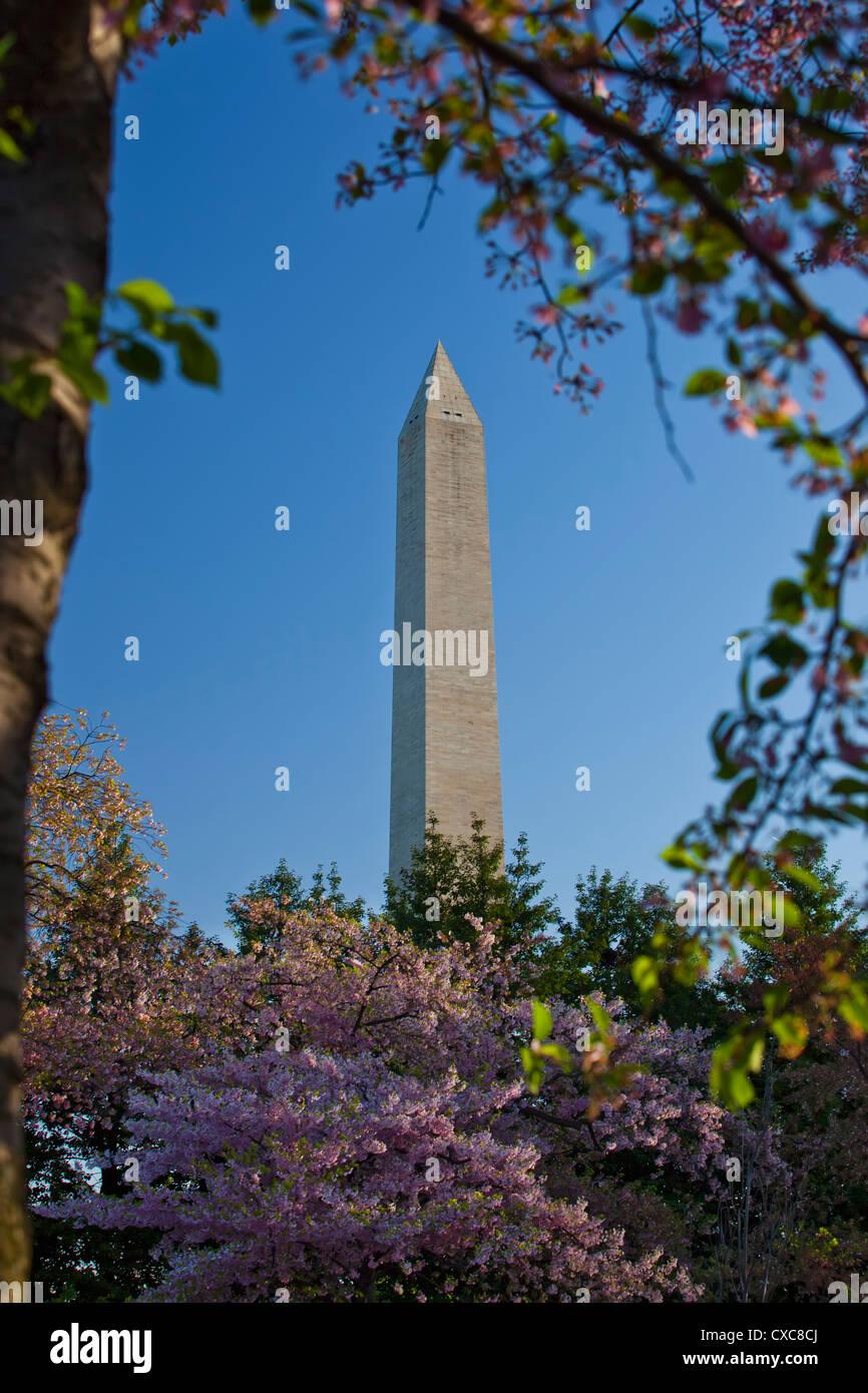 El Monumento a Washington enmarcado por árboles de cerezos japoneses en flor, Washington D.C., Estados Unidos Imagen De Stock