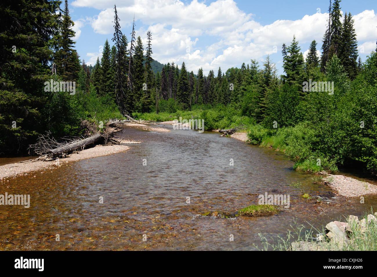 Monture Creek en Montana Imagen De Stock