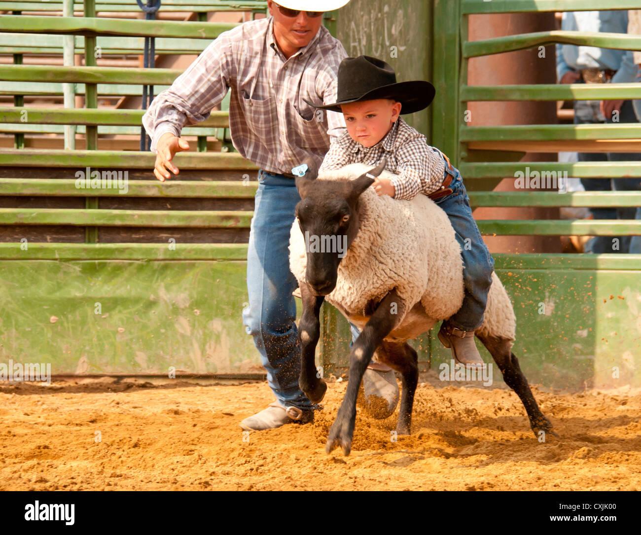 Joven Vaquero montando ovejas durante el cordero Busting caso Rodeo Bruneau, Idaho. Ee.Uu. Imagen De Stock