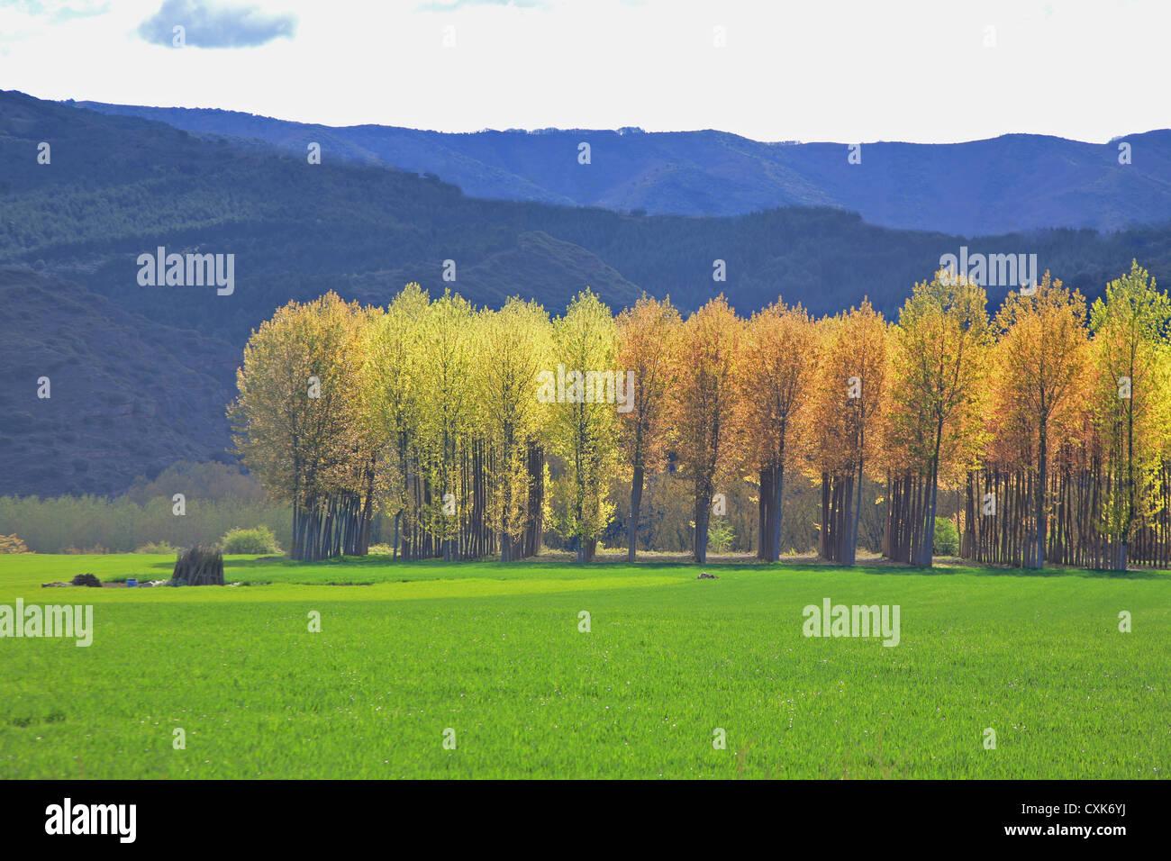 El tiempo de primavera en Najererilla Valley, la región vinícola de La Rioja, España Imagen De Stock