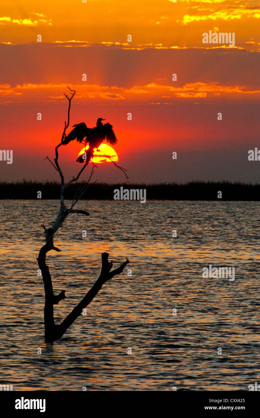 El contorno de un pájaro durante la puesta de sol Imagen De Stock