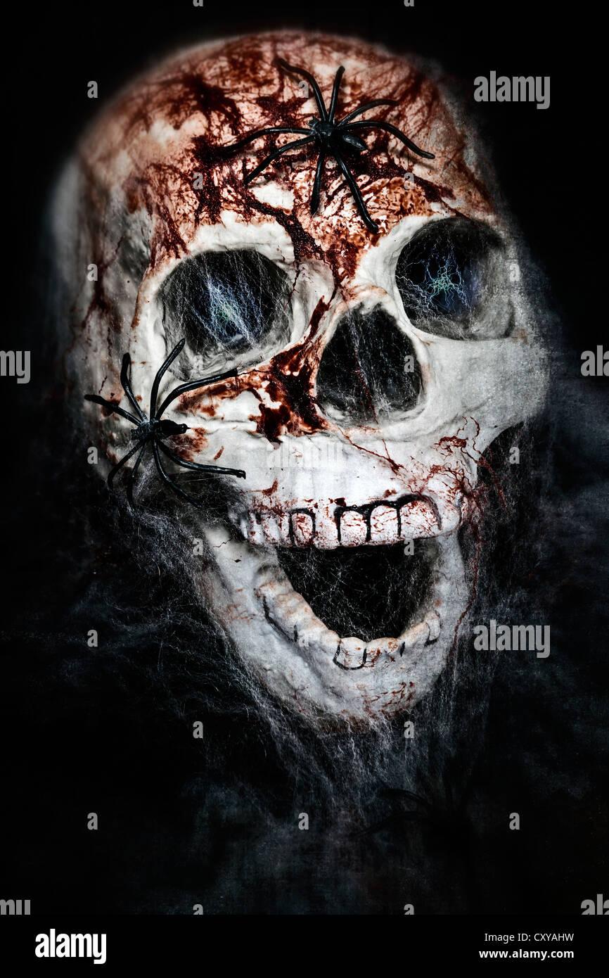 Un cráneo con cowebs sangrienta y arañas Imagen De Stock