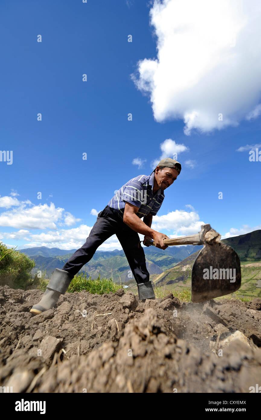 El agricultor en su campo de trabajo con una azada, comunidad de Mariano Acosta, Cantón Pimampiro, Provincia Imagen De Stock