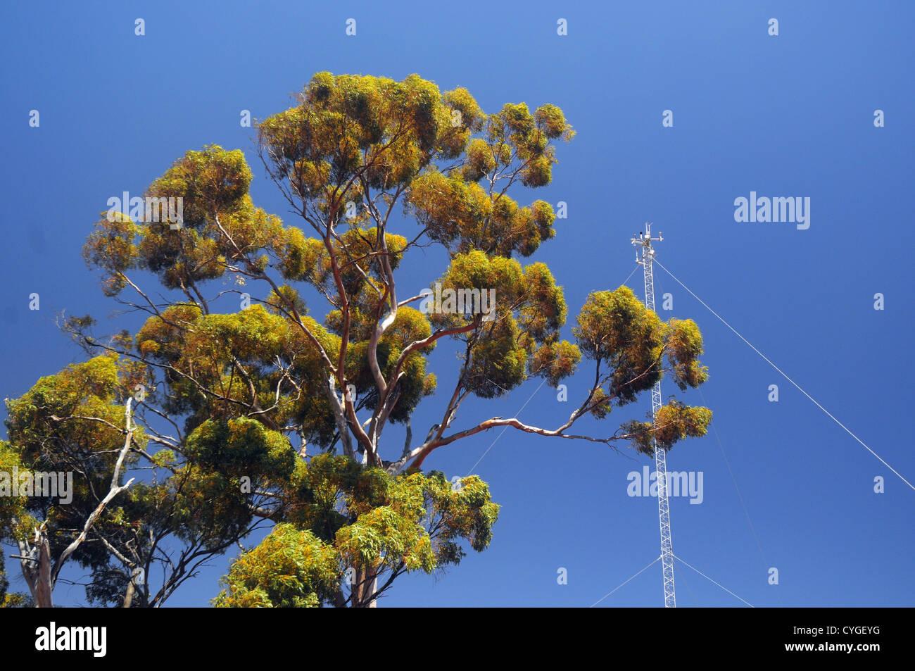 Torre de flujo de intercambio de medición de gases de efecto invernadero en el Great Western Woodlands Supersitio, Imagen De Stock