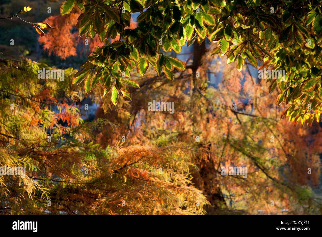 Hojas, otoño, contour, la naturaleza, el árbol, el verde, el color, la planta, sombra, luz, exterior, Imagen De Stock