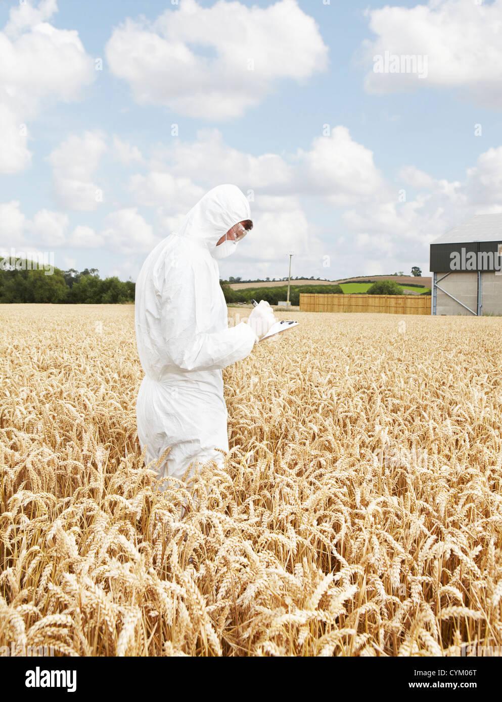 El examen científico de los granos en el campo de cultivo Imagen De Stock
