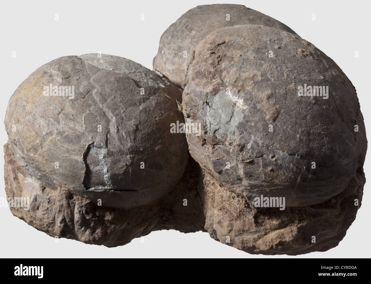 Huevos de dinosaurio, Triásico/período cretácico una nidada de 3 huevos fosilizados con las conchas Imagen De Stock
