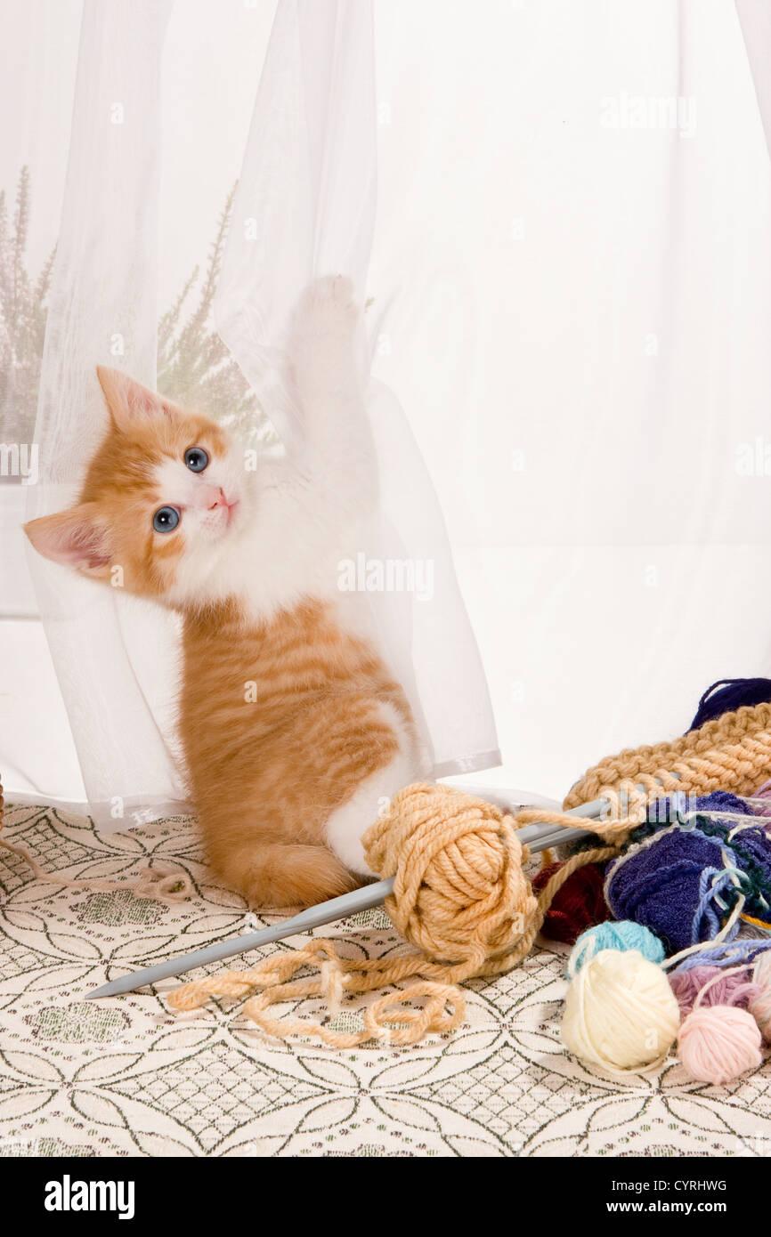 Lace Knitting Imágenes De Stock & Lace Knitting Fotos De Stock - Alamy
