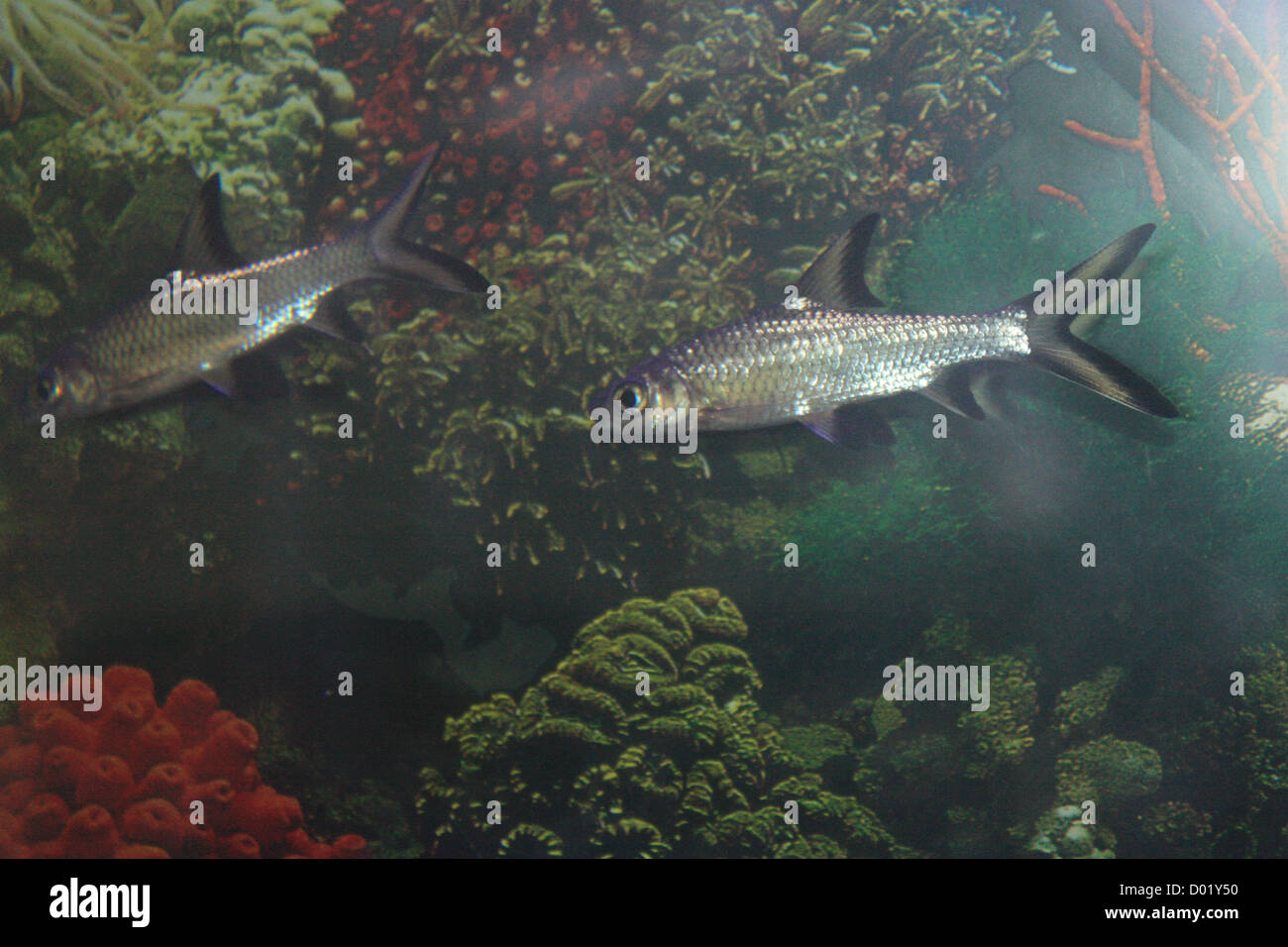 Los peces de agua dulce peces de acuario peces for Produccion de peces en estanques