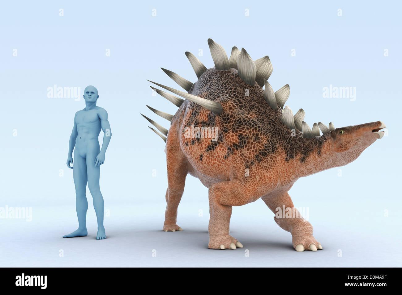 Modelo de un dinosaurio Kentrosaurus mostrando el tamaño en comparación con un humano. Foto de stock