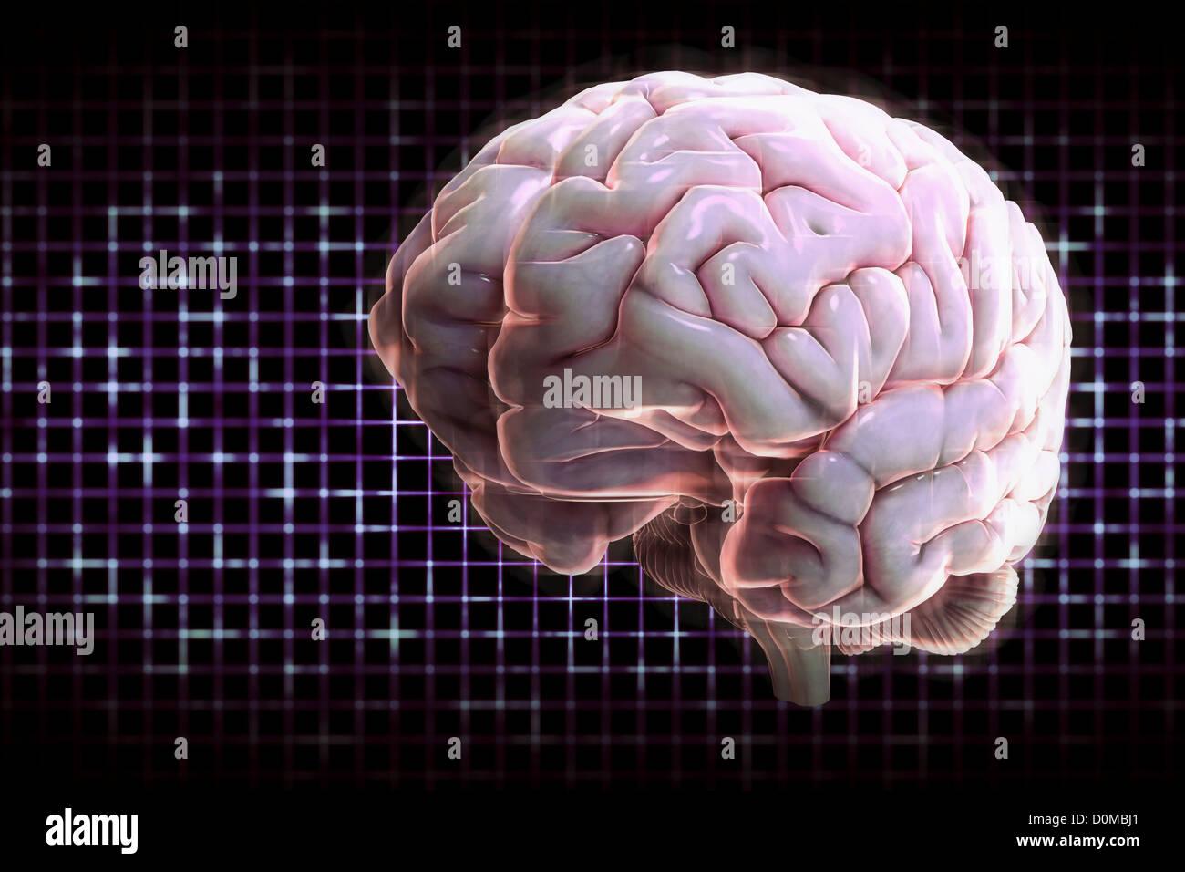 Una iluminada, digital diagrama de un cerebro humano Foto & Imagen ...