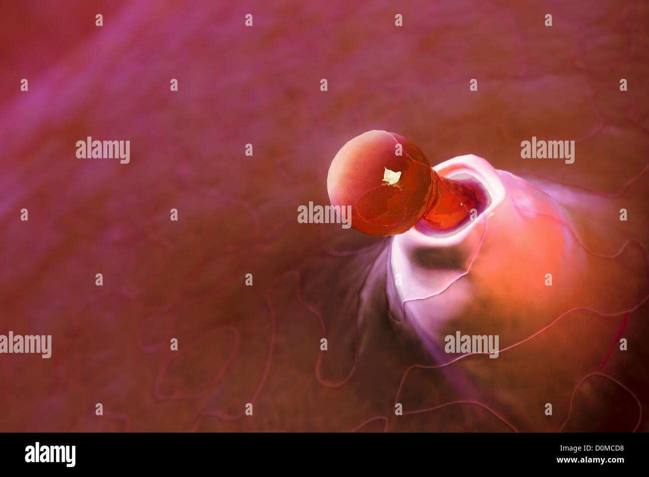 El proceso de ovulación dentro de un cuerpo femenino Foto & Imagen ...