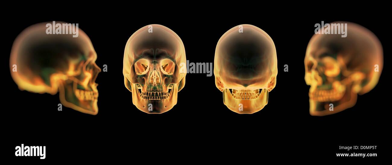 Fantástico Diagramas Cráneo Imágenes - Imágenes de Anatomía Humana ...