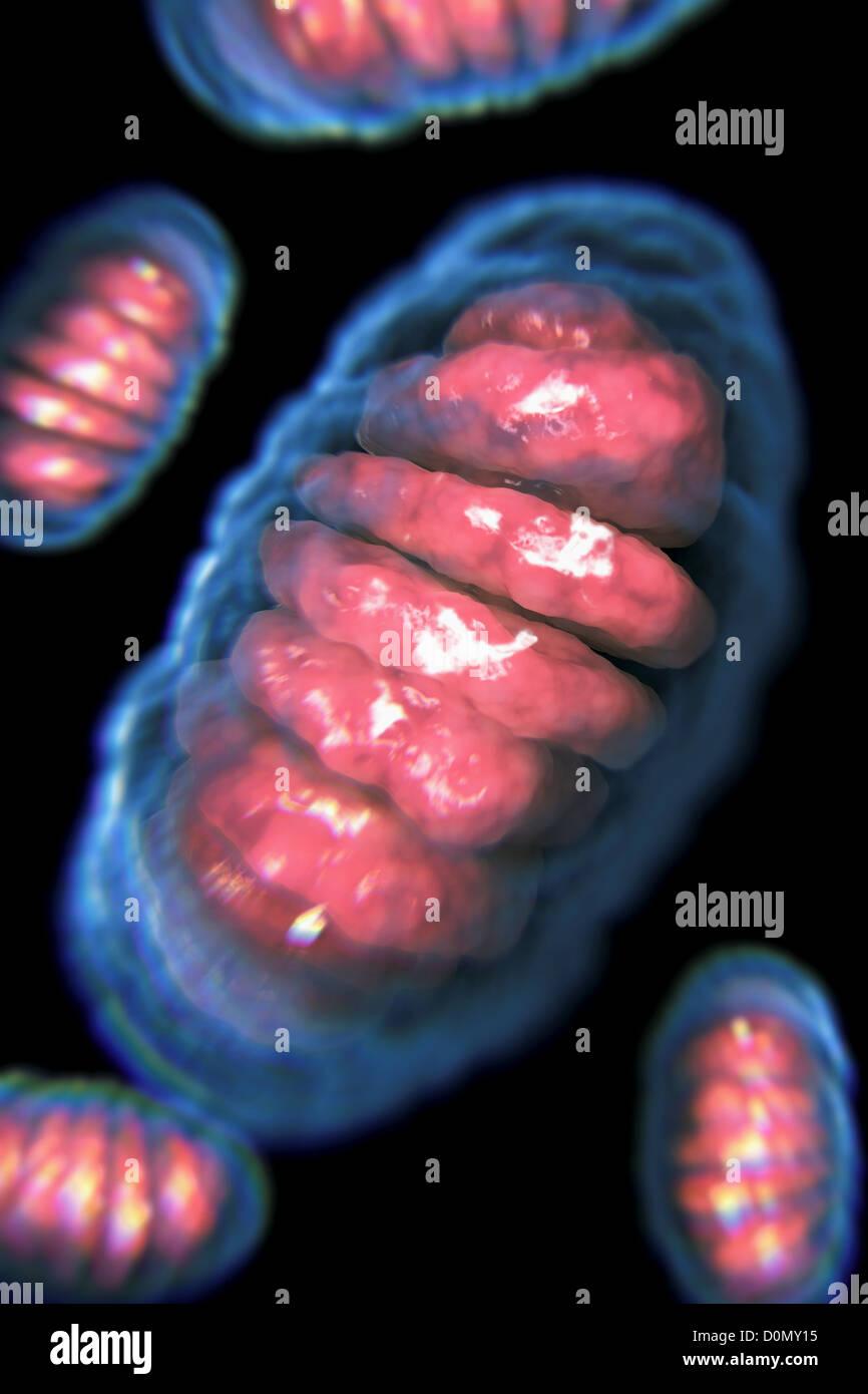 Vista desde el interior de una celda mostrando una mitocondria. Foto de stock