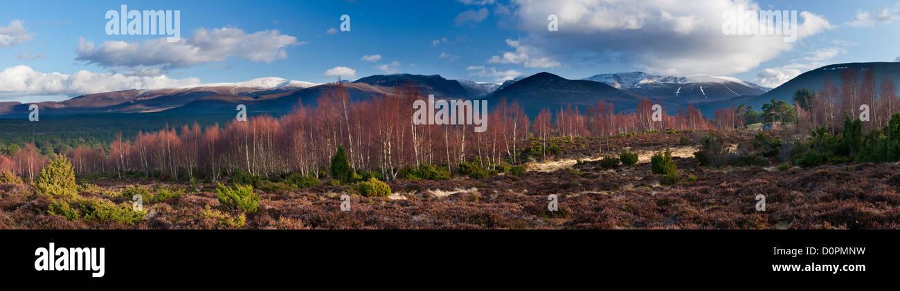 El bosque Rothiemurchus y Cairngorms en invierno, Scotland, Reino Unido Foto de stock