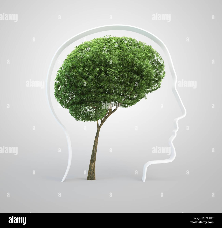 Cerebro - árbol cabeza humana Imagen De Stock