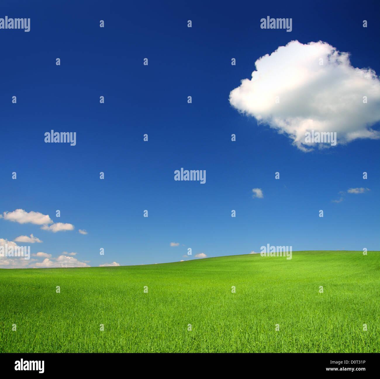 Green Hill con trigo bajo un cielo azul Foto de stock