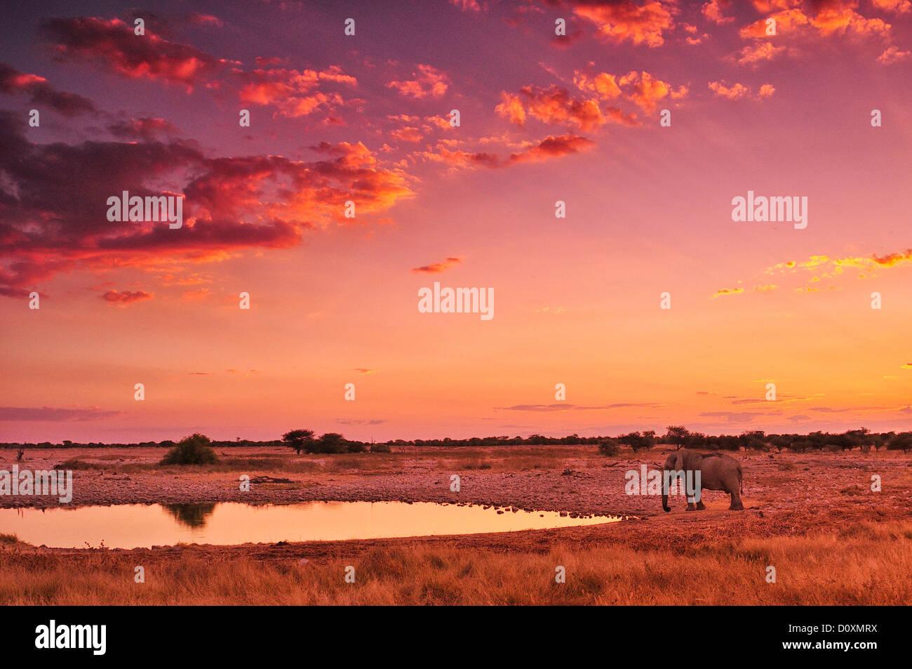 África, Namibia, el Parque Nacional de Etosha, puesta de sol, el elefante, el animal, waterhole, safari, animales Imagen De Stock