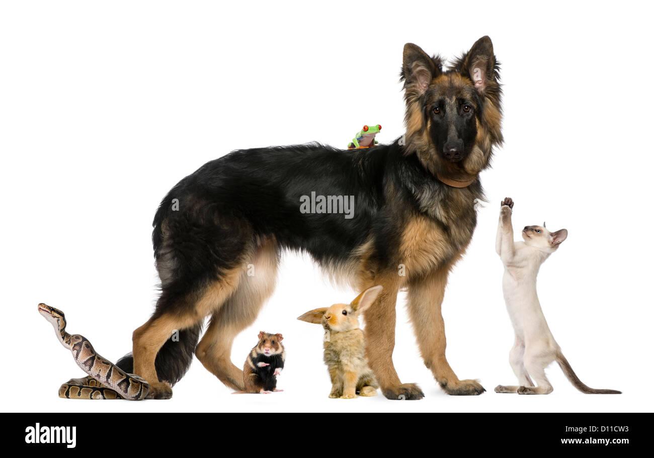 Grupo de mascotas y animales salvajes contra el fondo blanco. Imagen De Stock