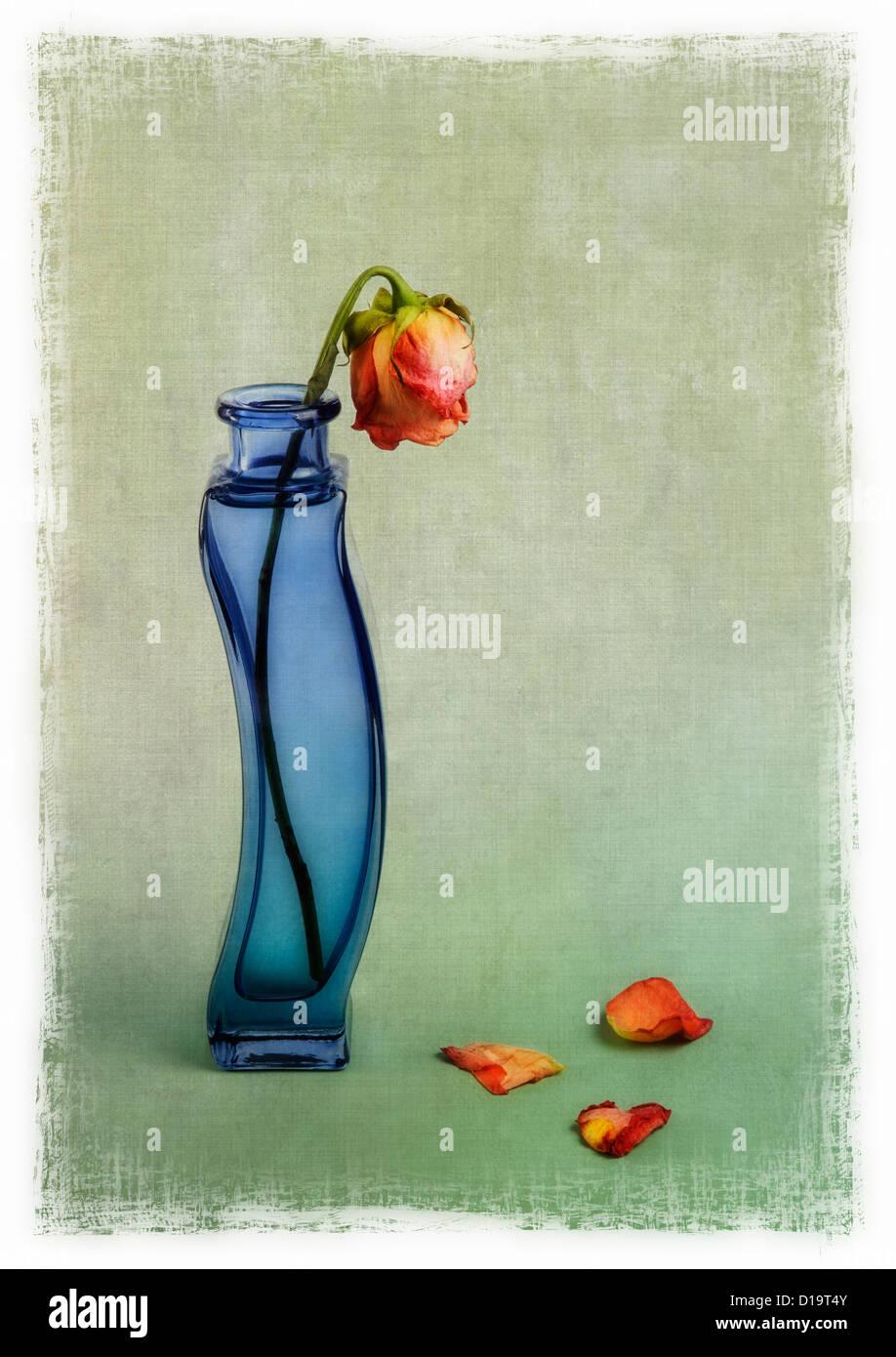 Rosa roja en jarrón azul con superposición de textura Imagen De Stock