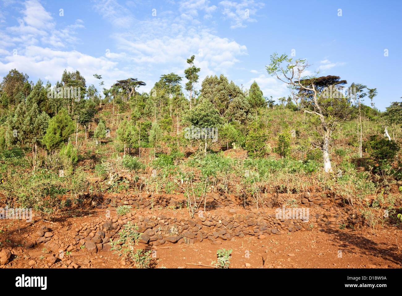 Secar El Cultivo En Terrazas En El Territorio De Los Konso