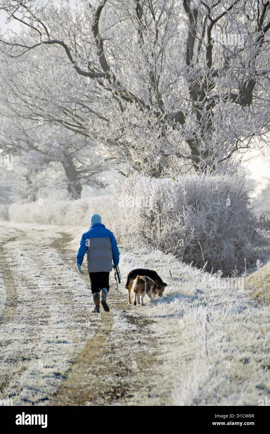 Invierno tiempo mujer caminando perro en el camino de campo en el campo ejercicio temprano por la mañana para perros hiar heladas en hedgerow rural Paisaje Essex Inglaterra Reino Unido Foto de stock