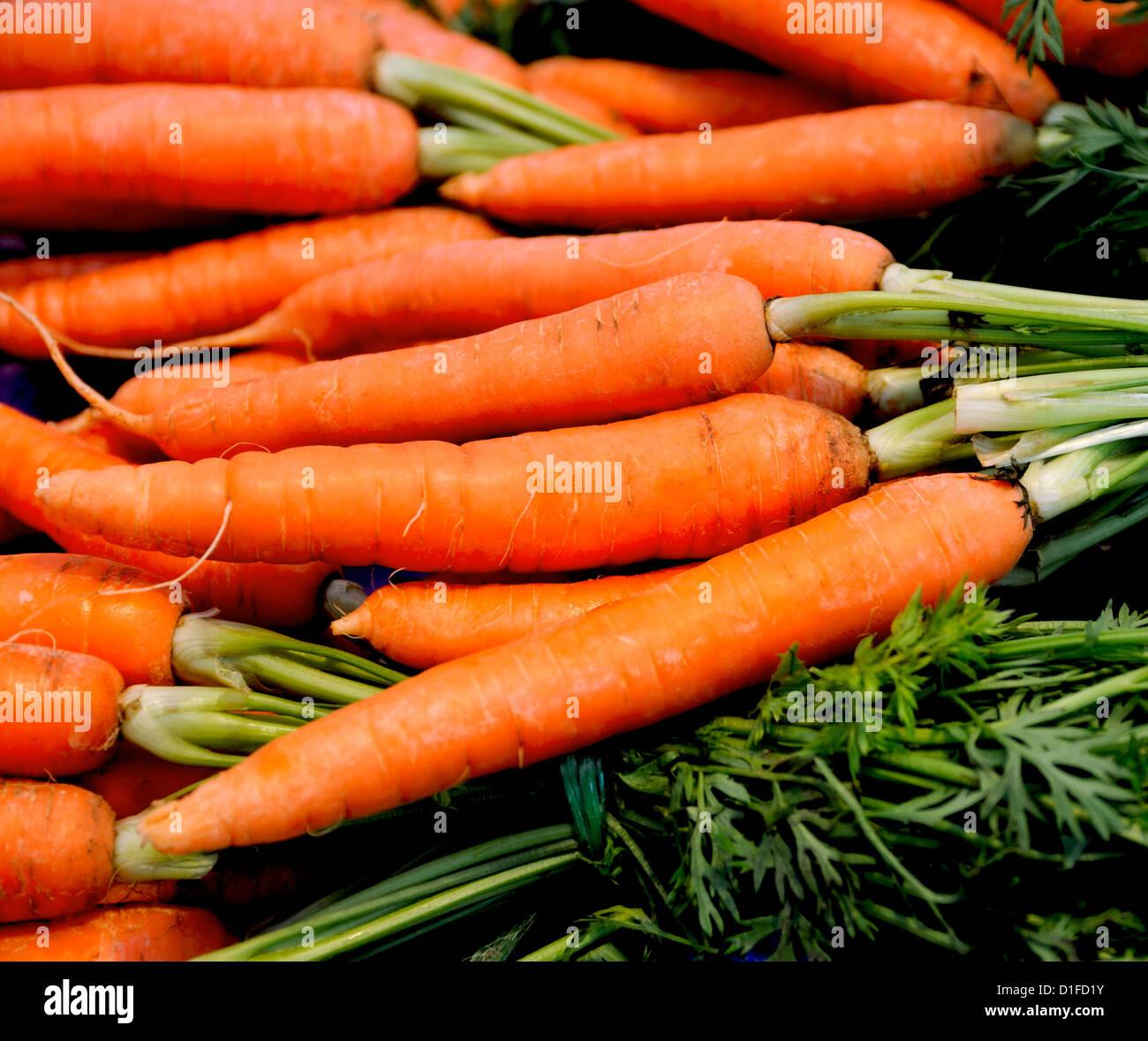 Las zanahorias frescas orgánicas CON GREEN TOPS Imagen De Stock