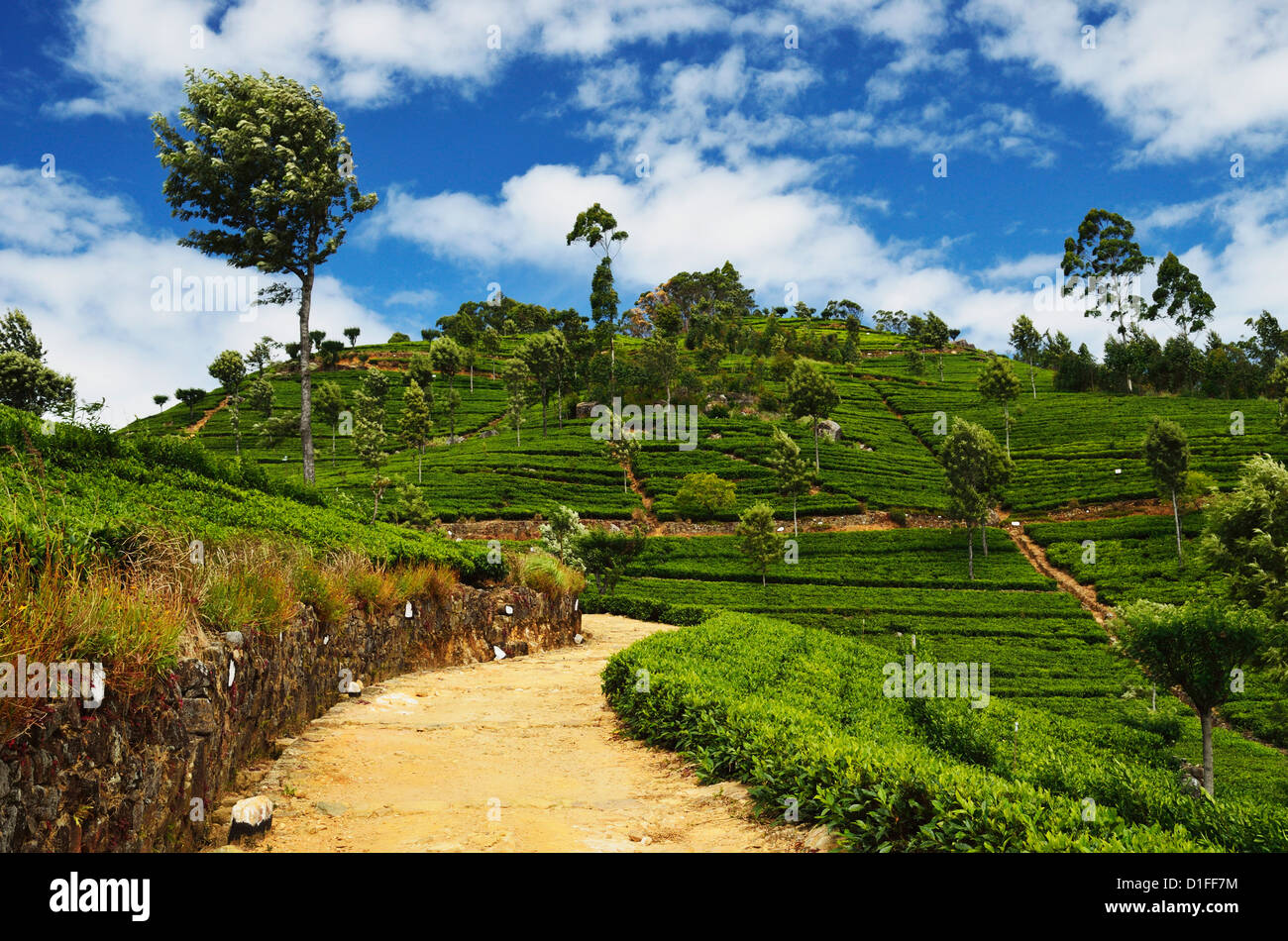 Vista de las plantaciones de té de Lipton del asiento, Haputale, Sri Lanka, Asia Imagen De Stock