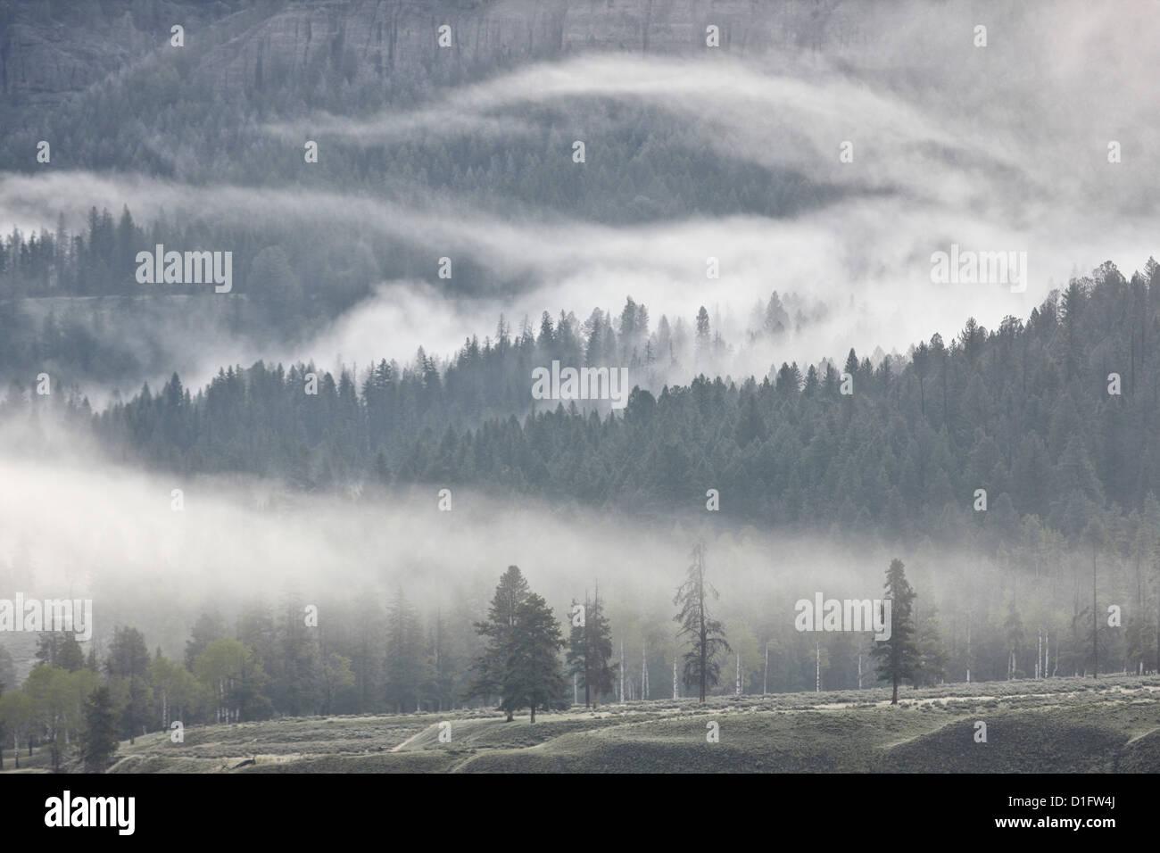 La niebla se entremezclan con árboles de hoja perenne, el Parque Nacional Yellowstone, Wyoming, Estados Unidos Imagen De Stock