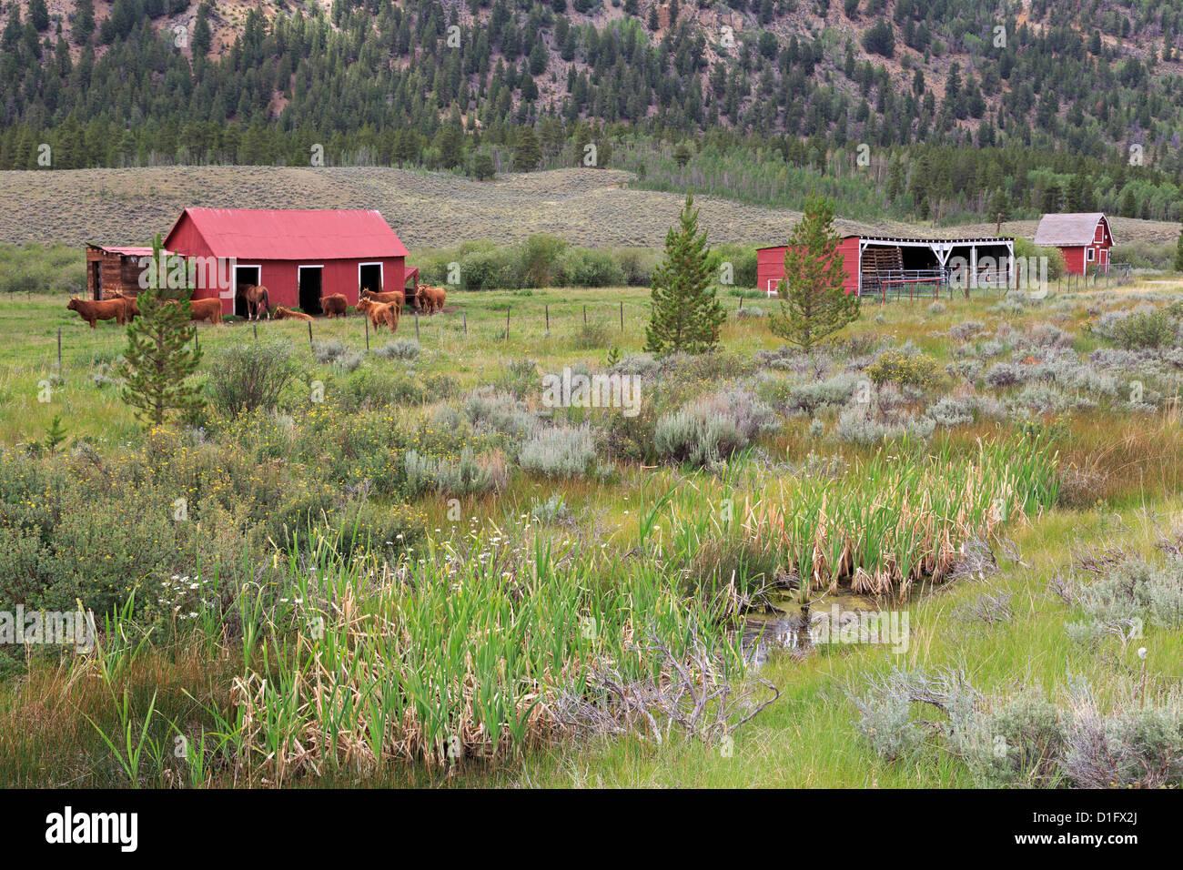 Granero en Ranch cerca de Leadville, Colorado, Estados Unidos de América, América del Norte Foto de stock