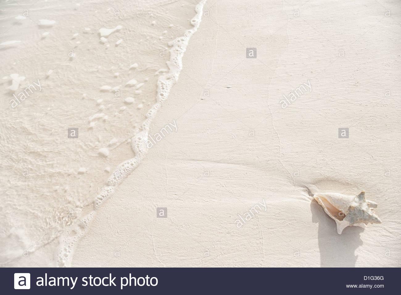 Caracola varada en playa de Grace Bay, Providenciales, Islas Turcas y Caicos, Antillas, Caribe, América Central Imagen De Stock