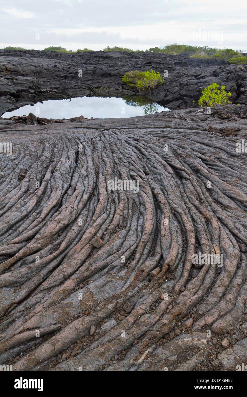 Flujo de lava, Isla Fernandina, Islas Galápagos, Patrimonio Mundial de la UNESCO, Ecuador, Sudamérica Imagen De Stock