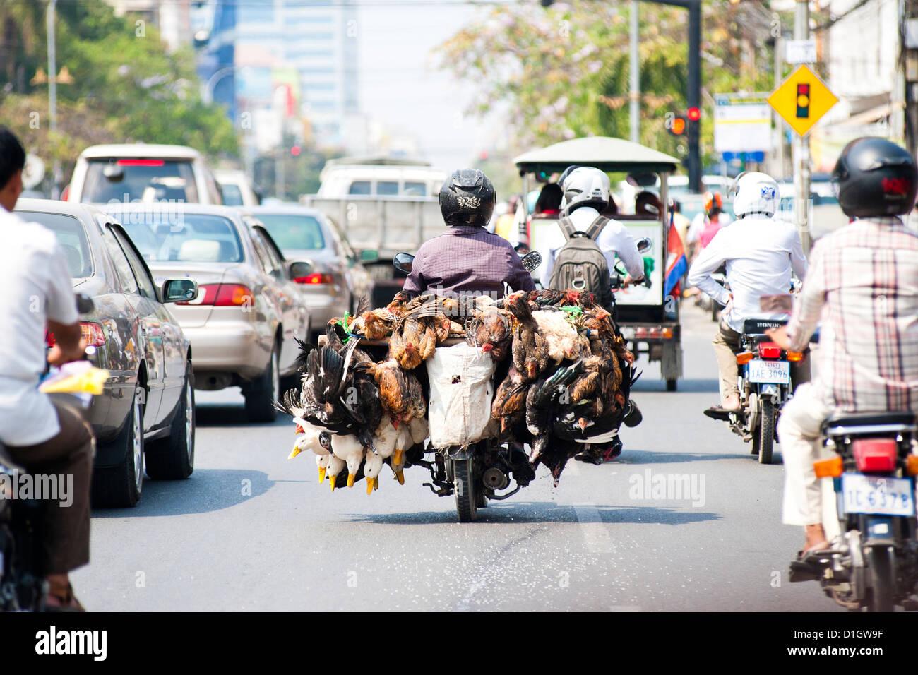 Vivir de pollos y patos han tomado al mercado en un ciclomotor en Phnom Penh, Camboya, en Indochina, en el sudeste Imagen De Stock