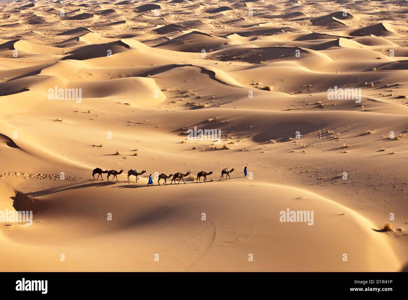 Marruecos, M'Hamid, Erg Chigaga dunas de arena. El desierto del Sahara. Conductores de camellos y la caravana de camellos. Foto de stock